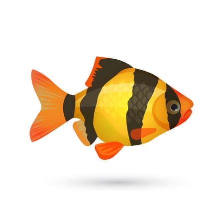 freshwater clown fish: Clown loach tiger aquarium fish isolated on white. Botia catfish in yellow and black colors. Marine striped zebra fish. Close illustration of underwater marine inhabitant. Vector illustration