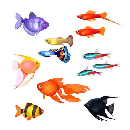 poecilia: Set of aquarium fish. Goldfish, Poecilia reticulata and carp, clownfish, neon marine pets, black and purple fish. Realistic and fairytale underwater characters. Editable isolated elements.