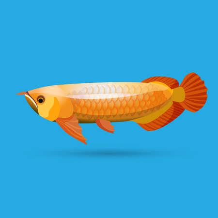 arowana: Isolated golden arowana. Freshwater bony fish bonytongues. Stock Photo