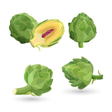 Artisjok groene bloemhoofdjes geïsoleerd. Vector illustratie van eetbare plantaardige