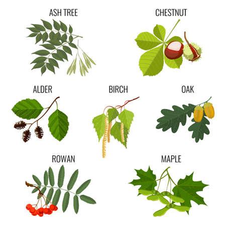 Ash, chestnut, alder, birch, maple, oak with acorns, rowan berries