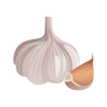 Garlic isolated on white background. Strong-smelling pungent-tasting bulb