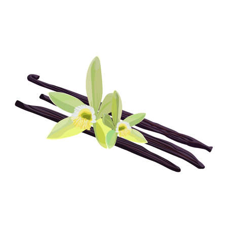 Vanilla sticks isolated on white background. Realistic vector illustration