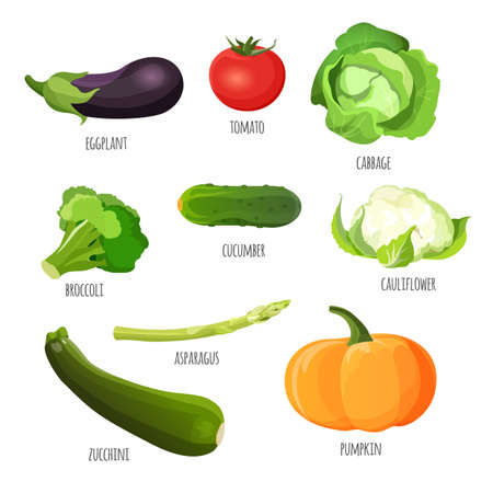 cabbage: Set of vegetables. Vegetarian food vector illustration. Purple eggplant, red tomato, green cabbage, fresh broccoli, tasty cucumber, delicious cauliflower, pumpkin and zucchini near asparagus stem. Stock Photo