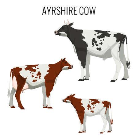 Ayrshire koeien geïsoleerd op wit. Vector illustratie van melkvee