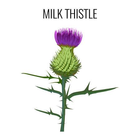 weeds: Milk thistle isolated on white background. Blessed milkthistle. Illustration