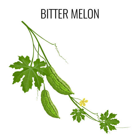 Bitter melon on white background isolated.