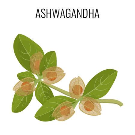 Ashwagandha hierba ayurvédica aislado en blanco. Withania somnifera.
