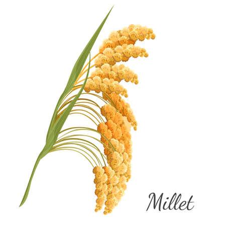 黄色のキビは白で隔離。穀物の現実的なベクトル イラスト  イラスト・ベクター素材