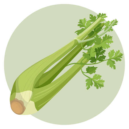 Celery green and fresh isolated in circle on white
