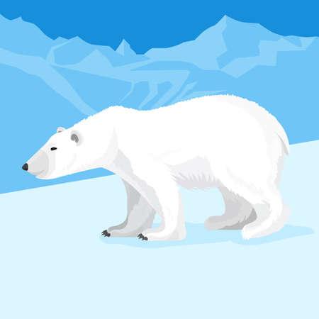 Big polar bear at north pole cartoon style. Vector illustration Illustration