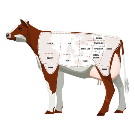 steak beef: Caw steak parts, beef cattle parted into departments icon isolated