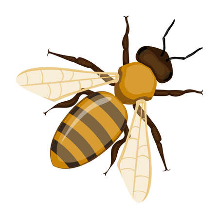 白の現実的な蜂蜜蜂クローズ アップ手の描かれたパターンを飛行