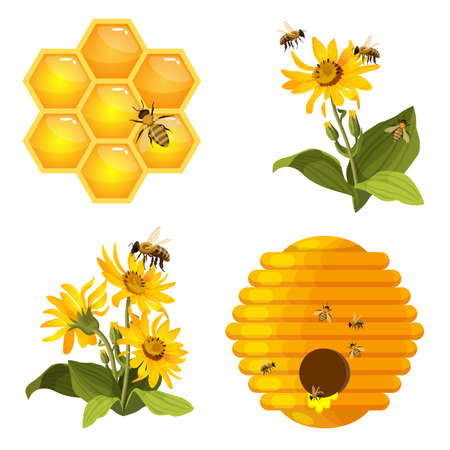 Bee on honeycomb, beehive nest, bees on yellow field flowers set isolated