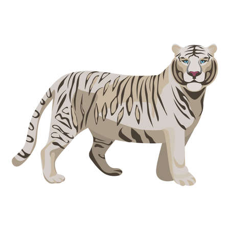 bleached: White or bleached tiger isolated on white. Predator rare animal