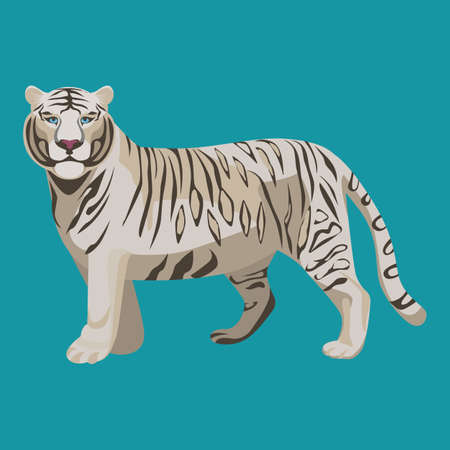 zoological: White or bleached tiger isolated on white. Predator rare animal