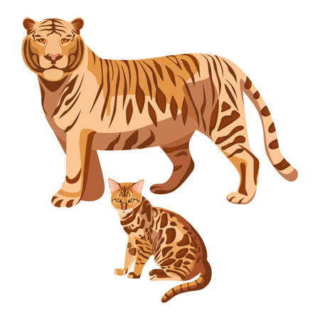 Bengal cats isolated on white. Big tiger and little kitten