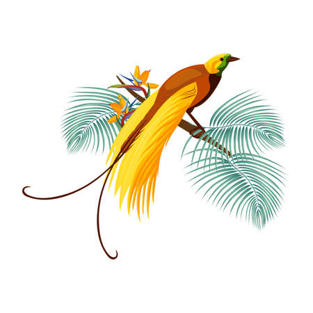 Greater bird-of-paradise with yellow tail sitting on branch 일러스트
