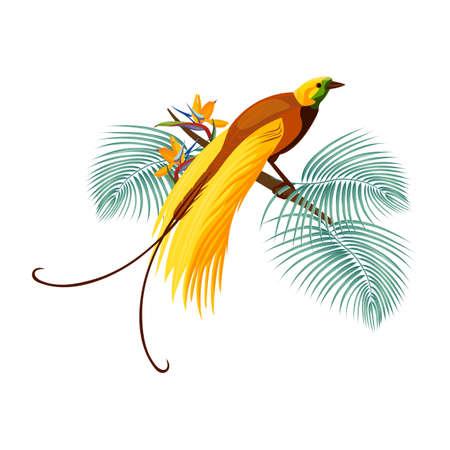 Grand oiseau-de-paradis avec queue jaune assis sur une branche Banque d'images - 77482297