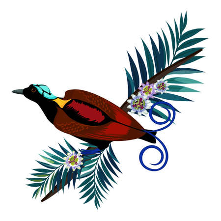 Wilson s bird-of-paradise in brown color isolated on branch Illustration