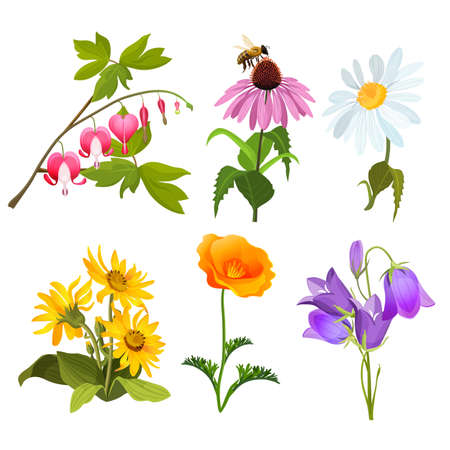 wildflowers: Set of echinacea, bleeding heart flowers, arnica, viola, chamomile, poppy Vettoriali