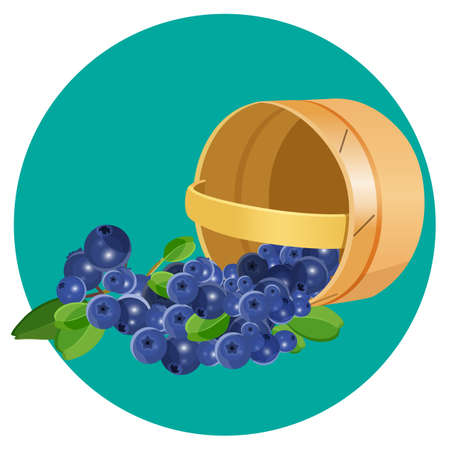 basketry: Wooden overturned basket with blueberries realistic vector illustration isolated on blue circle. Blue healthy berries with green leaves Illustration