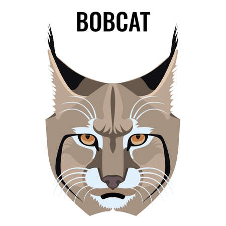 Portrait of bobcat vector illustration isolated on white. Cat specie with barred and spotted coat. Closeup of wild animal Vector Illustration