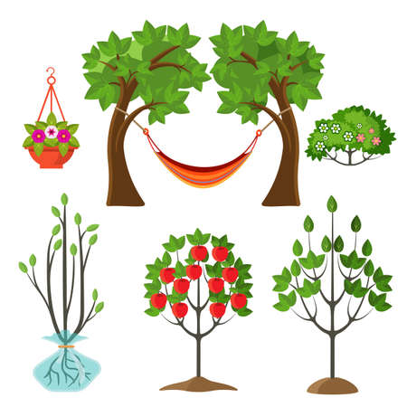 Set of summer plants in gardening concept. Stages of growth of apple tree, hanging basket with flower, hammock between branches vector illustration Illustration