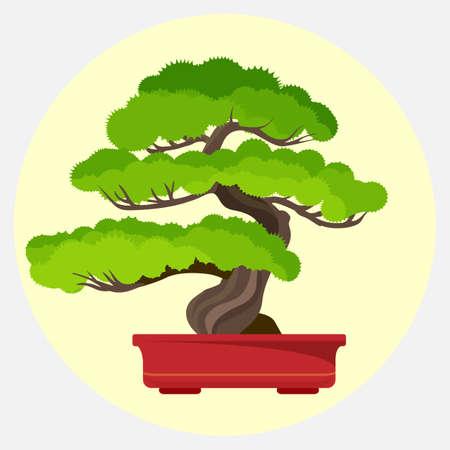 盆栽松のコンテナーのベクトル図に成長している装飾的な小さなツリー
