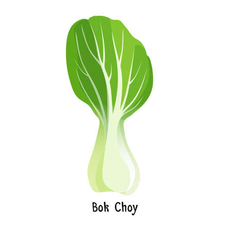 brassica: Bok choy or pak choi type of Chinese cabbage vector