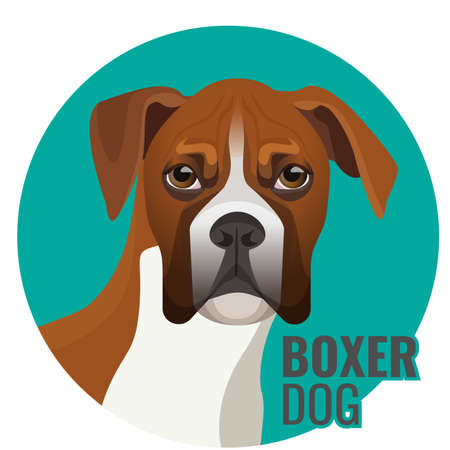 Boxer dog portrait vector illustration isolated on white. Medium-sized, short-haired breed of canine in blue circle with text