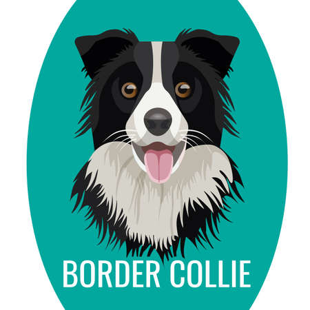 Border Collie huisdier portret geïsoleerd op blauw met naam van rasecht onder vector illustratie. Grote binnenlandse hond, favoriete huisvriend
