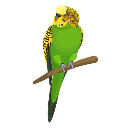 Budgerigar gewone of shell parakeet informeel bijgenaamde budgie vector illustratie