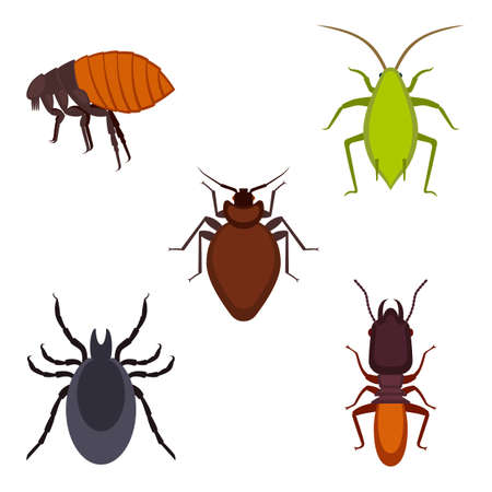 Collection of colorful bug icons on vector illustration