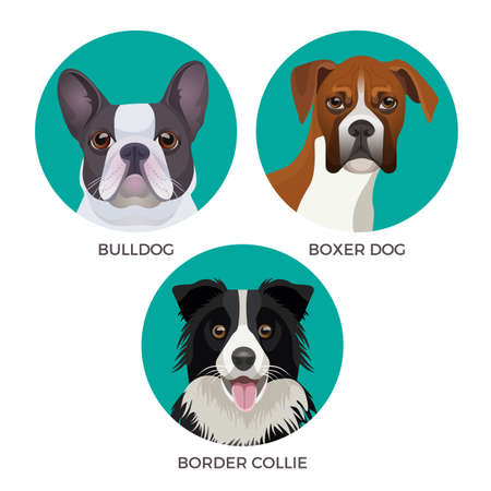 Short hair bulldog, boxer dog and border collie popular canine purebreds Illustration