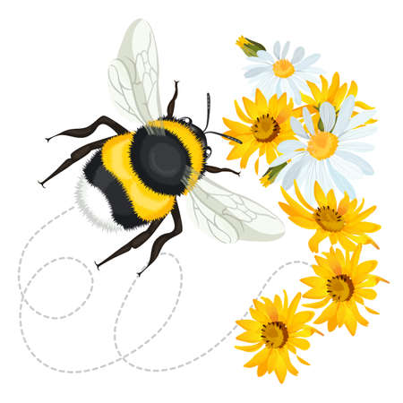 Bumblebee closeup head, trace swirled line on background arnica chamomile