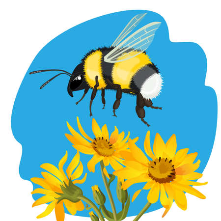 Bumble bee flying over yellow flowers on background of sky