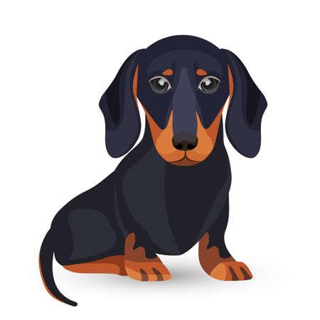 Dackel Hund mit schwarzem Fell in verschiedenen Positionen