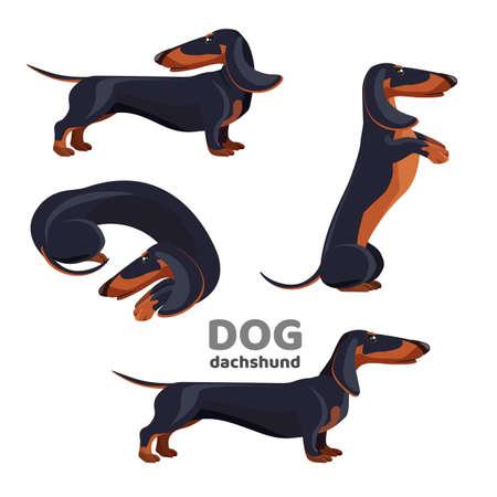 Dackel Hund mit schwarzem Pelz in verschiedenen Positionen Vektorgrafik