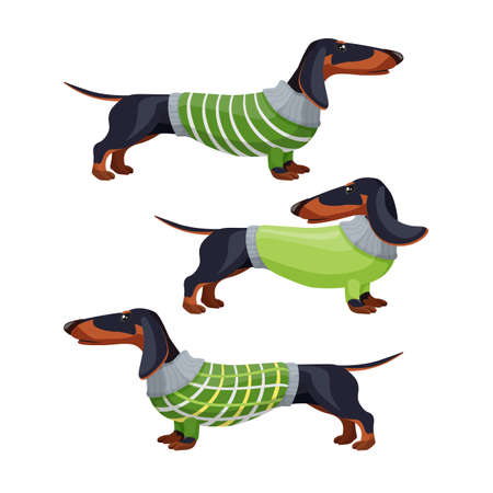 Dachshund dogs in green sweater side view vector illustration