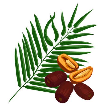 Fruits mûrs délicieux et branche de palmier vert isolé sur blanc