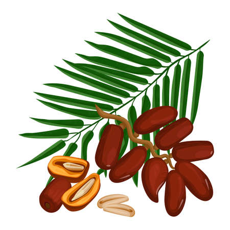 Delicious ripe dates fruits and green palm branch isolated on white Illustration