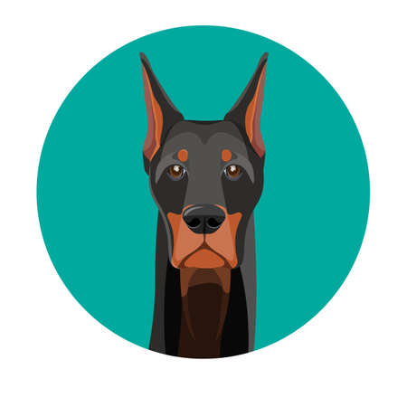 Snout of noble doberman with dark smooth fur