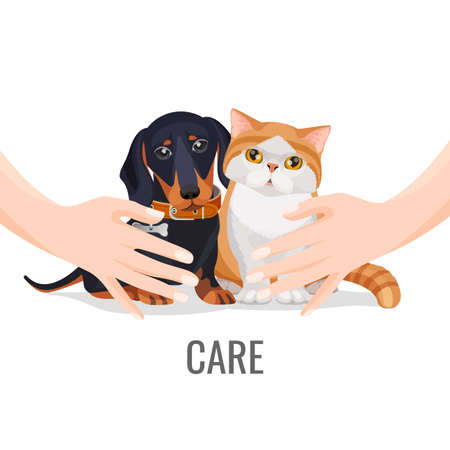 Human hands take care about cute pets dog and cat illustration.