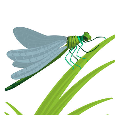 Dragonfly insect with big eyes and strong transparent wings and elongated body sits on green grass vector illustration isolated on white background.