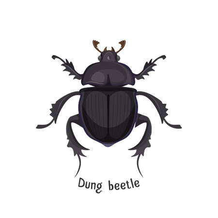 Black dung beetle that has strong unpleasant smell. Bug that lives in dirt and collect it. Small weird insect with three pairs of limbs vector illustration. Stock Illustratie