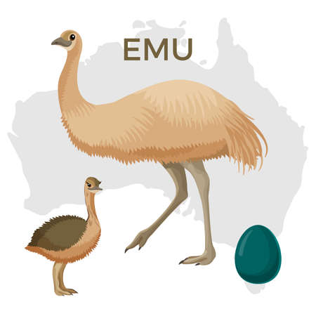 Emu bird, small and large isolated on white background vector illustration Ilustração