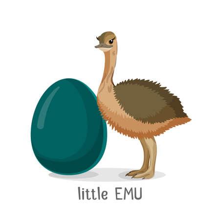 Little Emu bird isolated on white background