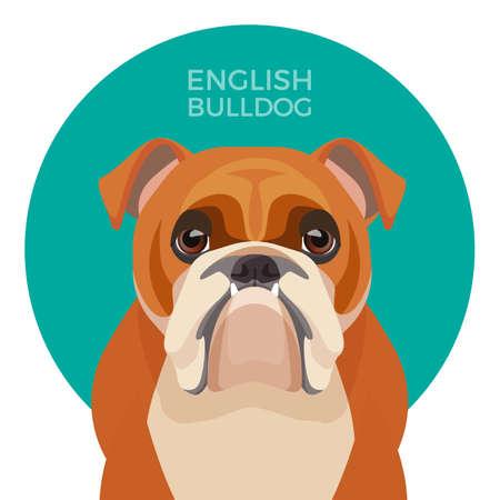 Englische Bulldogge mittelgroße Rasse, britische Bulldogge muskulös, kräftiger Welpe Vektorgrafik