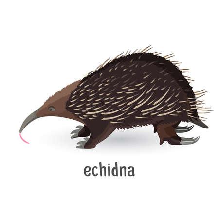 粗い髪と鋭い針で覆われたエキドナ  イラスト・ベクター素材